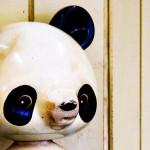 パンダアップデート4.2が実施された模様…大きな動きはこれからか?
