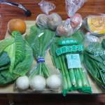 ぎっくり腰で外に出たくないニートが野菜宅配サービスを使ってみた