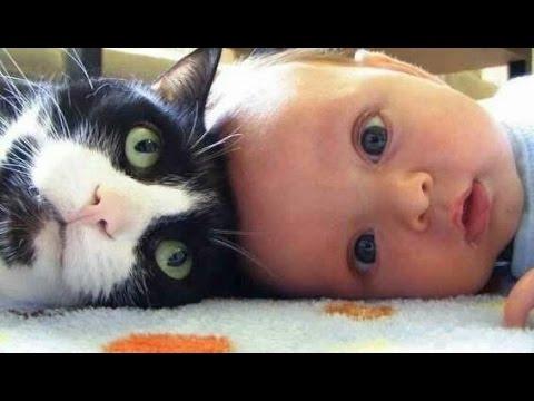 【動画あり】動物が子守をしている動画って何故こんなにも癒やされるのか